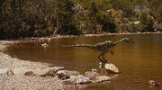 When Dinosaurs Roamed America Coelophysis Near Lake