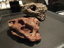 Dinosaurium, Deltavjatia vjatkensis