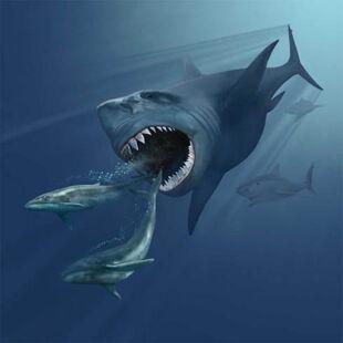 Фото акулы мегалодон ест кита