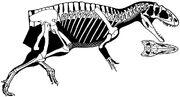 Sinraptor dongi