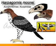 Harpagornis moorei by cenozoicking-db121ve