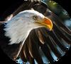 Птицы лого