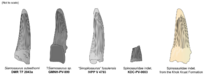 Зубы спорных спинозаврид