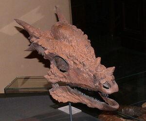 721px-Stygimoloch spinifer