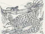 Азиатский гигантский панголин