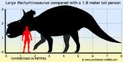 Pachyrhinosaurus-size