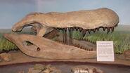 Purussaurus-cherep-m