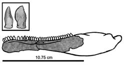 250px-Eshanosaurus IVPP V11579