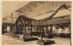 Postcard of Diplodocus carnegiei at the Carnegie Museum in Pittsburgh