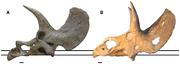 Nedoceratops vs Triceratops