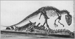 Allosaurus AMNH 5753
