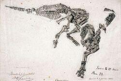Iguanodon художник Gustave Lavalette (2)