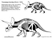 Triceratops raymond