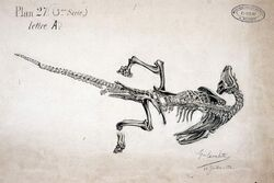 Iguanodon художник Gustave Lavalette (5)