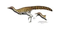 Alvarezsaurus-calvoi