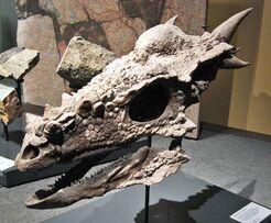 800px-Berlin Naturkundemuseum Dino Schaedel