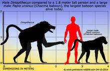 Dinopithecus-size (1)