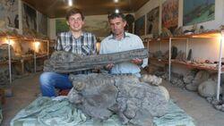 Николай Зверьков (слева) и Омар Хаписов (справа) с черепом ихтиозавра из Дагестана.