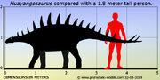 Huayangosaurus-size