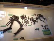 Pachycephalosaurus Sandy