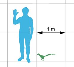 Jinfengopteryx-scale 4548
