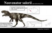 Neovenator salerii by teratophoneus-d60a08c