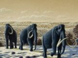 Степной мамонт