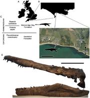 Pliosaurus kevani skull
