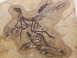 Anchiornis-huxleyi-fish