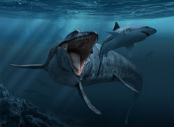 Mosasaurus shark