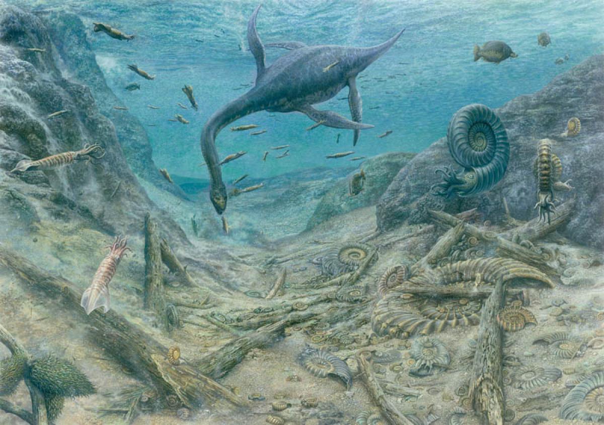 картинки про древних морских животных были