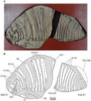 Ктенозавриск4