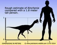 Rinchenia-size
