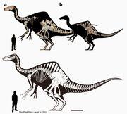 Deinocheirus skeleton