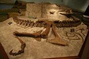 Tyrannosaurus fossils
