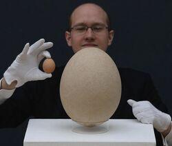 Яйцо эпиорниса