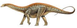 Dicraeosaurus-anness-publishing-nhmpl