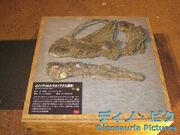 Omeisaurus skull 01