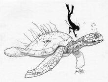Atlantochelys mortoni 2