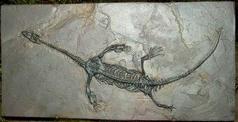 Кейчоузавр