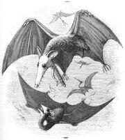 Pterodactyl reconstruction Edward Newman 1843