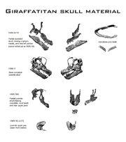 Giraffatitan skulls