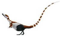 Sinosauropteryx mmartyniuk solosml