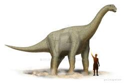 291 camarasaurus peter montgomery
