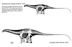 Apatosaurus louisae skeleton
