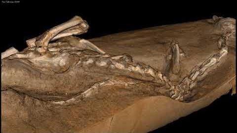 Halszkaraptor in 3D