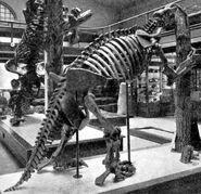 Скелет Megalonyx jeffersonii