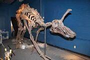 Циньтаозавр 13