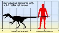Deinonychus-size