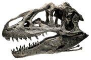 Allosaurus Ebenezer